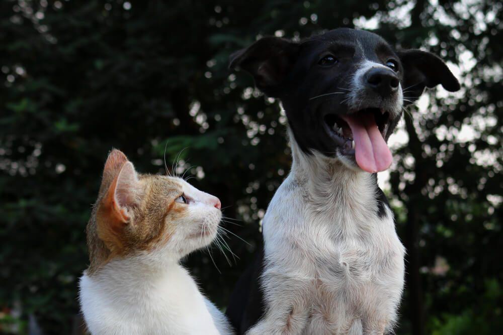 Foto de perro y gato