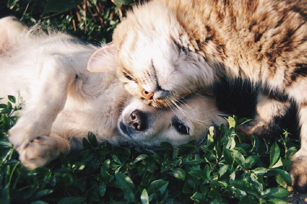 foto de Mascotas en puente alto
