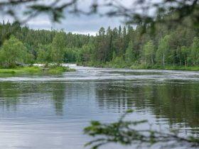 Foto de rio con arboles alrededor