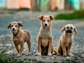 Foto de perros en la calle - Somos Puente Alto